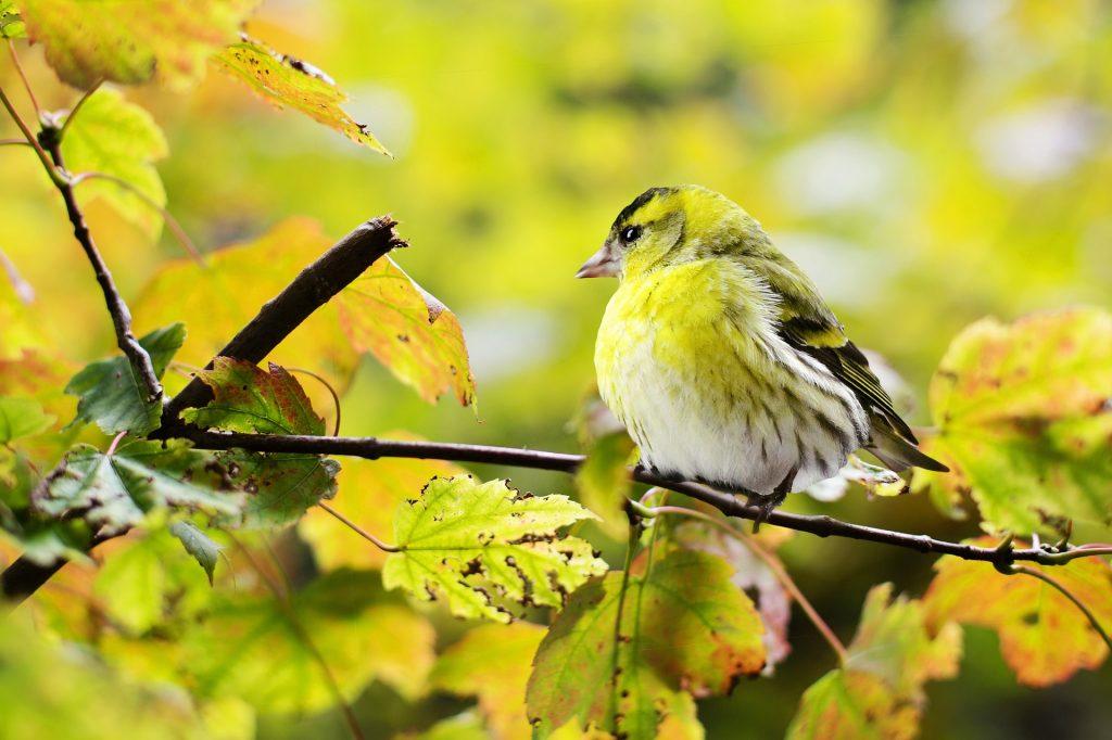 木に留まった鳥