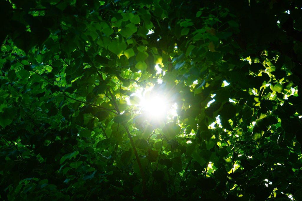 自然 太陽の日差し