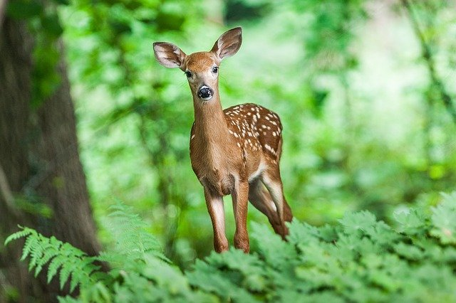 奈良公園のシカを斧でたたきつけた犯人はだれ?【顔画像】吉井勇人とは何者?